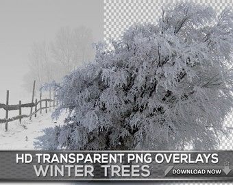 30 REAL TRANSPARENT PNG Winter Trees In Snow Overlays - Transparent Png Tree Photoshop Overlays Of White Frozen Snow Trees For Photo Editing