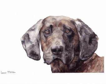 Watercolour Hound Portrait- Pet Portrait- Hound Art- Dog Painting- Dog Print- Animal Print- Bavarian Hound- A4 Print- Art by Lewis Hanson
