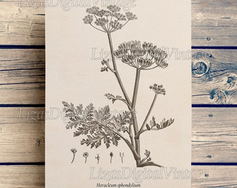 Wall art, Flower print, Antique print, Botanical printable, Instant download print, Illustration, Art print, Poster, 8x10, 11x14, A3, Floral