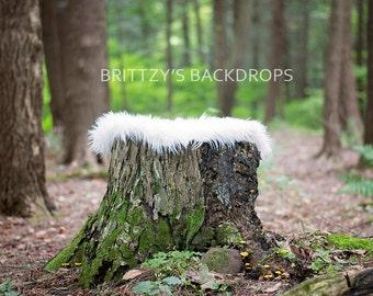 Tree Stomp Newborn Digital Backdrop