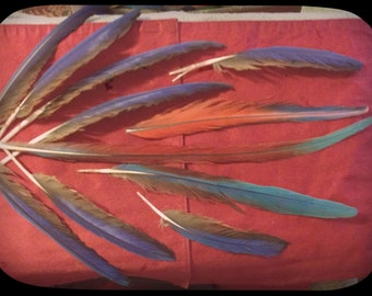 Greenwing & Scarlet Macaw Feathers