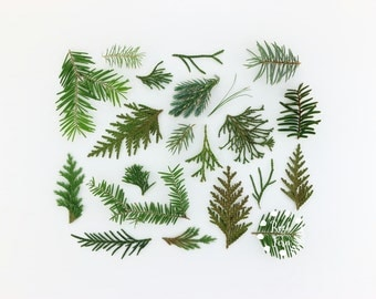 Evergreen Photography Print ~Nature Photography ~ Minimal Photo ~ Flat Lay Photography ~ Modern Photography ~ Still Life Nature Photography