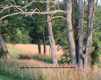 Kentucky Landscape rural tree grove pastoral