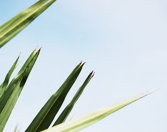 Grass and the Sky, Perspective, Nature Photography, Florida