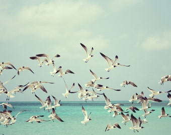 Seagulls - Seagulls Photo - Sea Photo - Seaside - Nautical - Turquoise - Digital Photo - Digital Download - Instant Download - Home Decor