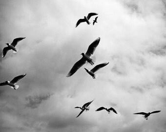 Birds - Birds Photo - Birds Digital Photo - Sky - Black&White Photo - Black and White - Digital Photo - Digital Download - Living Room Decor