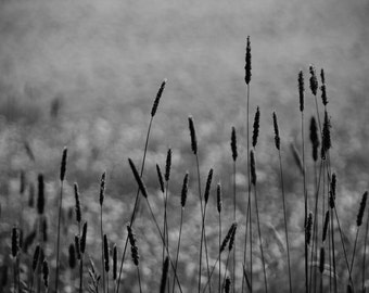 Black and White Digital Photo - Fields Digital Photo - Grasses Photo - Black and White - Digital Photo - Digital Download - Wall Art