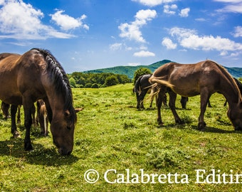 Horses grazing . Fine art photography. Wild horses. Printed on photo paper or artistic canvas.