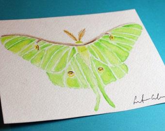 Original Luna Moth Watercolor- 5 x 7