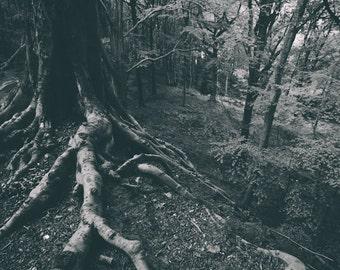 Roots (mono), Landscape Photography, Woodland Landscape, Wall Art, Home Decor