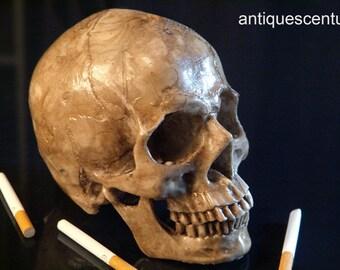 Skull human replica. Craneo humano. Calavera a tamaño real....AntiquesCentury