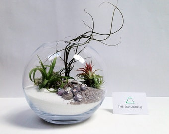 Large Airplant Terrarium Fishbowl Kit with 3 Tillandsia plants~ glass vase personalised gift diy wedding desk table centrepiece office decor