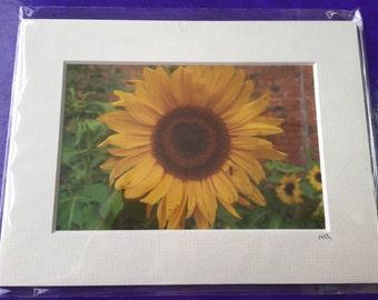 Mounted Sunflower Photo Landscape