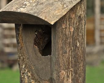 oak bird box for Robin