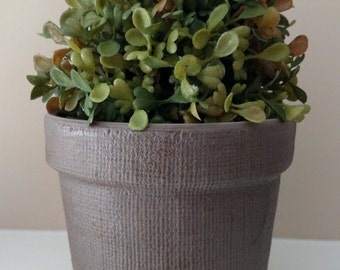 Round boxwood decorative potted plant