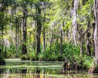 Swampy Bayou