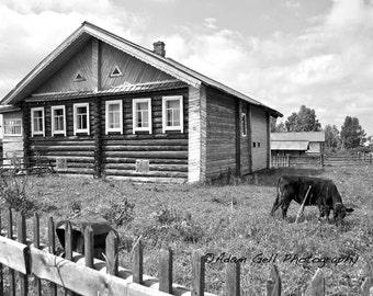 Mezhador,Komi Republic, syktyvkar, cow, Landscape Photography, Russia, Log cabin house, Nature, wall art, Wall Decor,Print art,Pусский домой