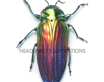 Rainbow Jewel Beetle Insect Metallic Beautiful Bug Natural History Scientific Illustration Art Print by Headspace Illustrations