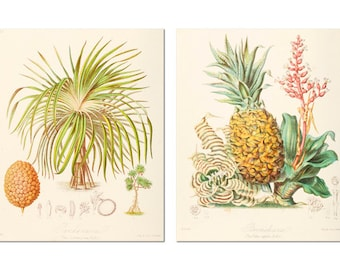 Pineapple, Pineapple book diagrams, Print Set, Antique pineapples, Vintage pineapple, book plates reprint, vintage, kitchen art, food art