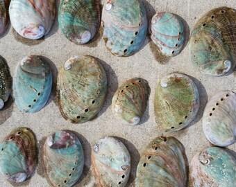 """Raw (100) unpolished Red Abalone Shells Bulk- Size 1-4"""""""