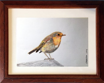 Drawing incl frame - bird (robin) coloured pencil drawing - original