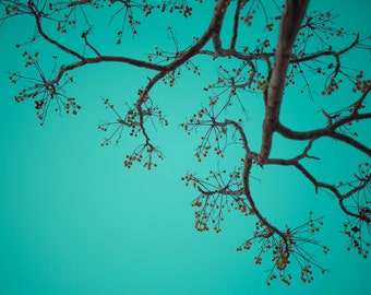 Neural network of branches