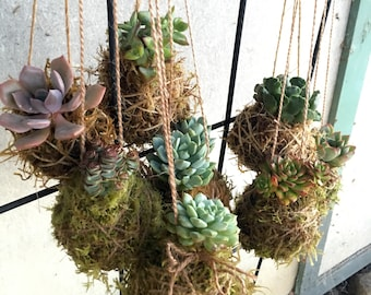 3 succulent hangers (living containers)
