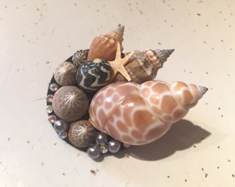 Who Sells Seashells By the Seashore Hair Clip