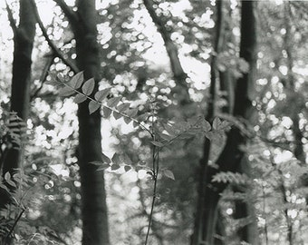 Hand Printed Black and White Photograph - 'Trees in Berlin'