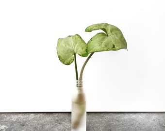 Tiny Plant in Tiny Vase