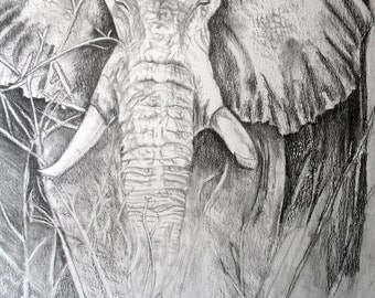 Giclee Print: Elephant. Original pencil drawing by Maria Hampton.