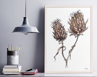 Botanical Print, Illustrated Dried seed heads