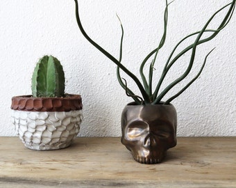 Gold Skull Planter - perfect for cactus succulent or air plant