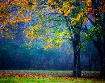Colorful Landscape, Autumn Foliage, Tree, Nature Photography, Fog Photography, Fall Decor, Autumn Photo, Colorful Tree, Vibrant Decor
