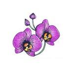 crimsonorchid