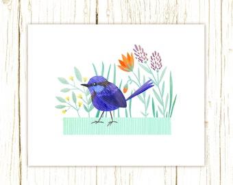 Splendid Fairy Wren Print -- bird art --blue bird art 52 birds stephanie fizer coleman illustration