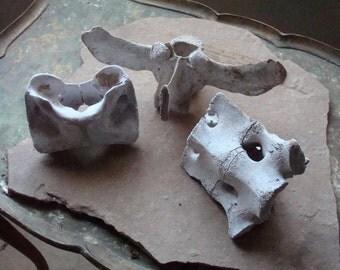 Cow Bones, Large Vertebrae and Atlas Real Natural Bones for Assemblage, Altered Art, Mixed Media