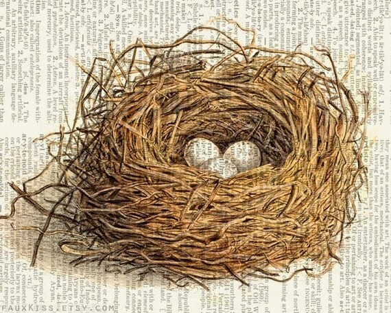 bird nest dictionary print