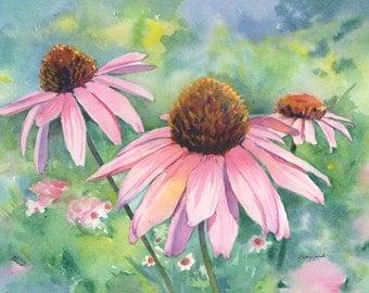 Coneflowers Watercolor Print - Pink Daisies  Art - Pink floral art print