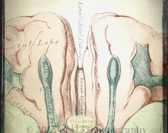 Anatomical Art, Medical Anatomy Print, Brain, Oddity, Surreal Decor, Neutral, 5x5 inch Fine Art Photography Print