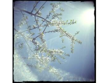 Flower Photography, Spring Blossoms, Lomography,  Sky Landscape Photo , Fine Art Print, Shabby Chic Wall Art