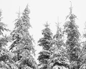 Snowy Trees Art - Black and White Tree Prints - Winter Trees - Snow Photography - Extra Large Wall Art - Modern Rustic - Bedroom Wall Art