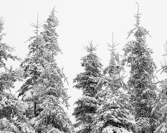 Enchanted Forest Picture - Winter Wonderland - Snow Photography - Large Tree Art Print - Extra Large Ski Art - Canada Nature Prints
