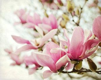 Botanical photography print pink magnolia spring flowers pink green wall art - Magnolias