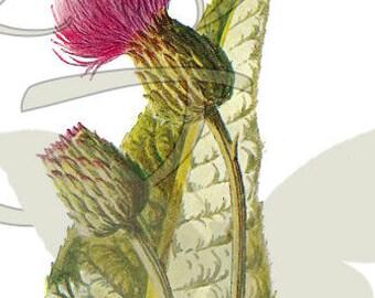 Flower Botanical Art Illustration Digital Download Printable Clip Art Wildflower