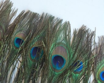 PEACOCK  FEATHER FRINGE, Very Rare,  Peacock, Teal  Blue / 300