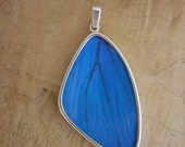 Real Blue Morpho Butterfly Wing Pendant - XL Wing Shape - beautiful bug, insect, fly, butterflies, silver, slide, great, gift, best, mother