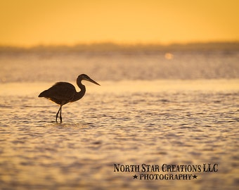 Photo note card, blue heron, sunset, ocean, sky, fine art, blank inside, thank you card, nature widlife