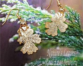 Real Oak Leaf Jewelry,  Little  Oak Leaf Earrings, Gold Dipped,lacy natures jewelry