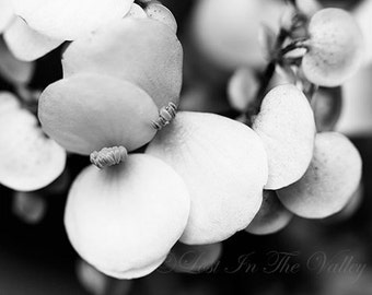 Begonia Flower, Floral Photograph, Wall Decor, Fine Art Photography, Nature Photo, Blooms, Black, White, Grey, Cottage Chic, Floral Print